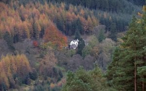 The Cottage in the Wood